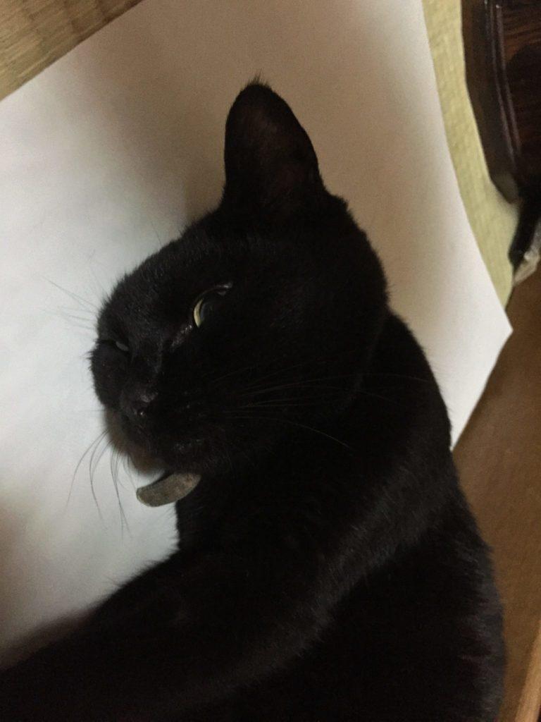 眼の前でごろんしてお腹をみせる猫
